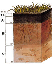 Pictre of Soil Profile