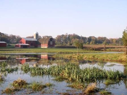Restored wetlands