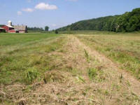 pasture with 1950s drainage ditch