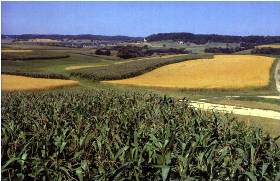 scenic farm view of crop rotation