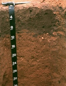 Photo of a Downer Soil Profile