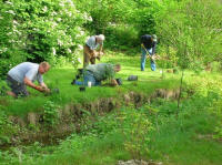 volunteers install plants at stream restoration site