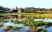 restored wetland on New Jersey farm