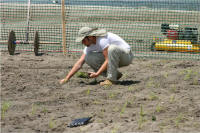 Installing plants at Jamaica Bay site