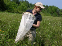 Photo of woman scanning for pollinators
