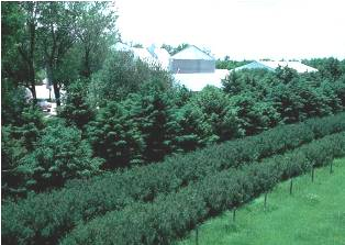 Photo example of a windbreak