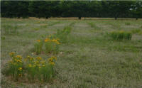 Photo of pollinator plants beginning to attact pollinators