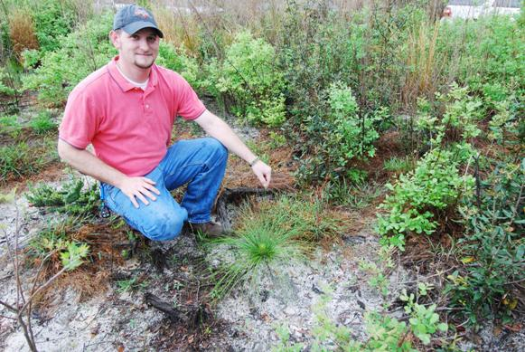 Marshall Colburn in a typical longleaf habitat essential for gopher tortoise.
