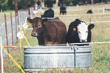 trough in paddock