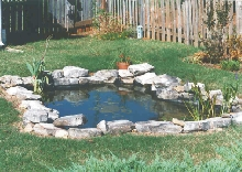 back yard pond