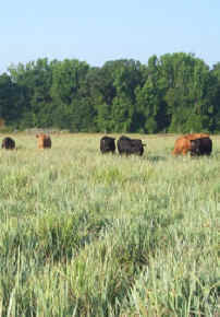 Financial assistance will be provided for the establishment of native grasses such as Indian grass.