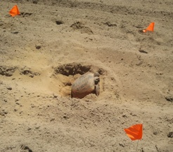 Marking gopher tortoise nest
