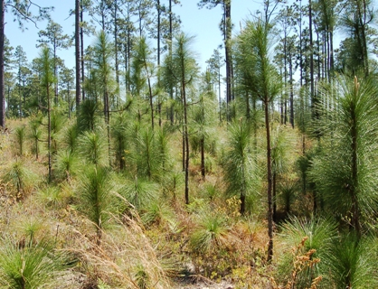 Alabama ANRC receives National Award for conservation and forestry stewardship.