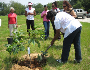 Field trip included  4-H school beautification project where the group planted a tree at an area school.