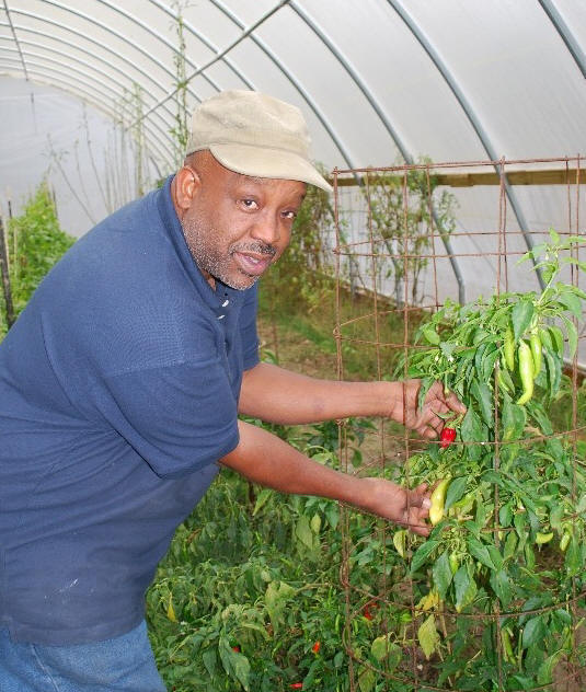 Michael Pitts shows his peppers growing in hoop house.