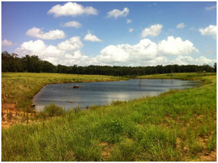 AWEP pond in Geneva Co.