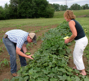 Sherri Price and Drew Wright harvest squash and cucumbers grown organically.