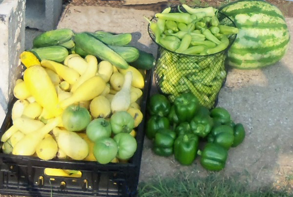 photo of squash, tomatoes, peppers, cucumbers and watermelon.