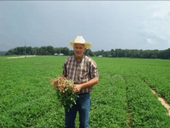 farmer grows peanuts in north Alabama.