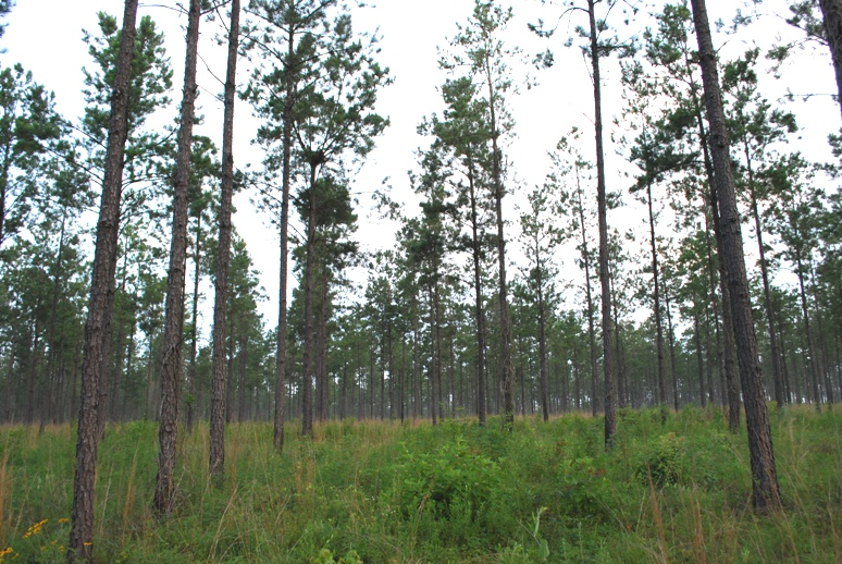 Timber improvements were made to the PBCI Magnolia Branch Wildlife Reserve.