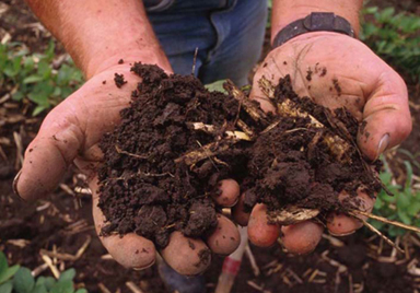 photo of a man's cupped hands filled with clumps of soil