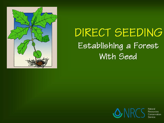 Slide 1 - Direct Seeding Title