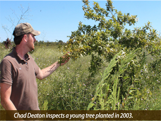 Chad Deaton inspects a young tree planted in 2003.