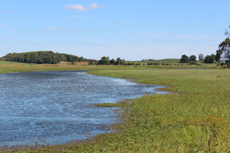 A shallow wetland restored further in the county.