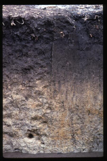 Sable Soil Profile