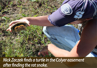Nick Zaczek finds a turtle in the Colyer easement after finding the rat snake.