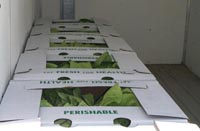 lettuce is boxed and cooler soon to be shipped