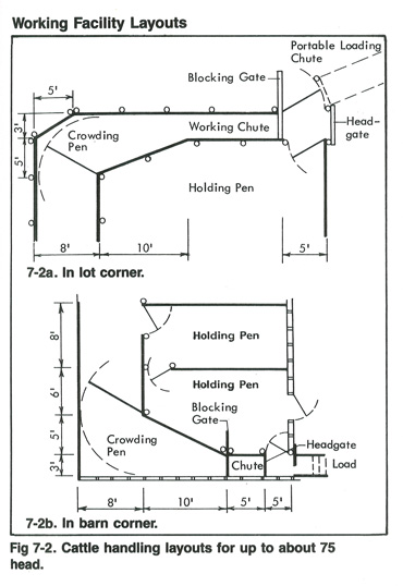 Diagram of Cattle Handling Layouts for up to 75 Head