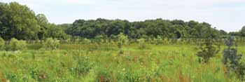 What floodplain could look like in five years with trees and prairie grasses