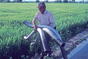 Irrigation siphon tubes are carried by Dean Kirkman on a farm in Murray. The land was fall leveled and planted in barley and fescue.