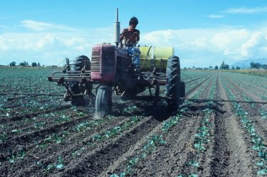 Cabbage being sprayed for insect control in West Layton. Dave Motta is operating the tractor.