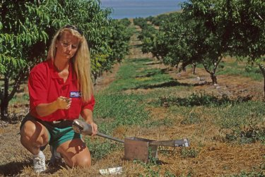 Soil samples in a Santiquin orchard are taken by SCS Soil Con Tech Janice Richardson.