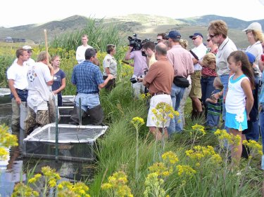 Spotted Frogs took the spotlight during a media event reporting on progress of a joint effort to repatriate the Columbia Spotted Frog Swaner Nature Preserve wetland in Park City