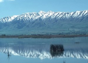 Wetlands provide a haven for migrating ducks, geese and other water fowl in Cache County, Utah
