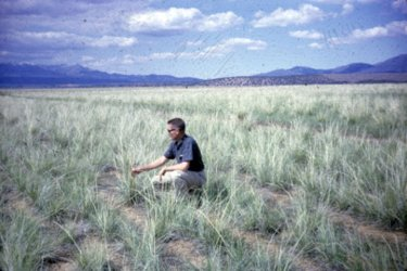 Tall Wheatgrass located near Fillmore, is examined by SCS employee Gerald Johnson.