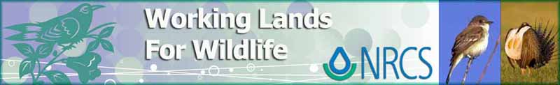 Working Lands for Wildlife (WLFW)