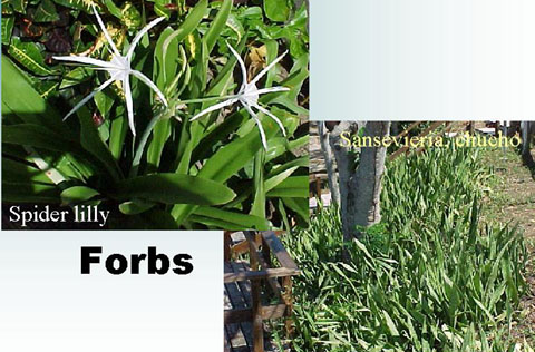 a photo of two different forbs species
