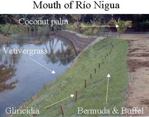 a photo of different plant species used in the Rio Nigua Project