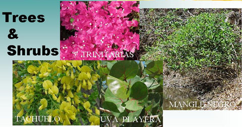 a photo of different trees and shrubs species