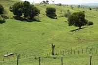 Prescribed Grazing with good conservation cover on the steep lands in the Caribbean Area.