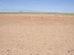 In the background of this photo, it is evident how residue in this irrigated field is helping to save the soil; whereas in the foreground area where the crop failed, there is significant wind erosion that has exposed hard pan.