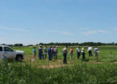 Meeting attendees toured the Noble Foundation�s switchgrass field trials. 2007 planting is in the foreground and members are standing in recent 2008 planting.