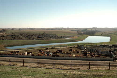 The five-acre total containment structure was necessary because of the size and slope of Hansen�s feedlot.