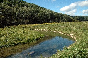 Stream banks with riprap and covered with prairie cord grass