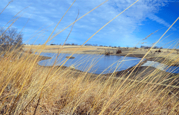 John Aschenbrenner converted erosion-prone cropland to native grasses through the Conservation Reserve Program (CRP) in 2009 before completing his wetland creation project last fall.