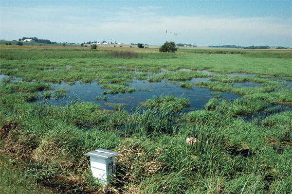 Boeck�s wetland benefited from heavy August rains. The water level control device allows him to lower the water level, if need be.